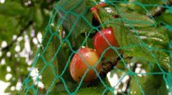 Anti-bird nets