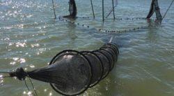 Pond fishing (eel)
