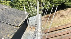 Anti-pigeon spikes