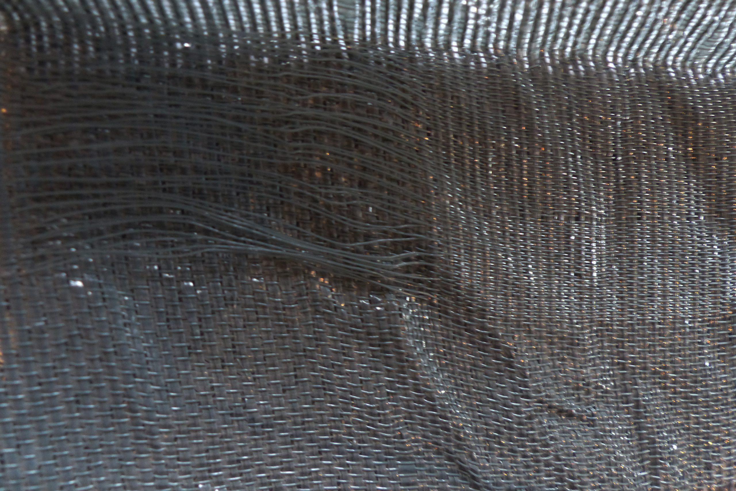 Editis gris